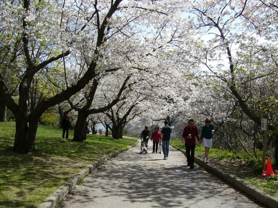 Paisaje durante la primavera en el High Park en Toronto