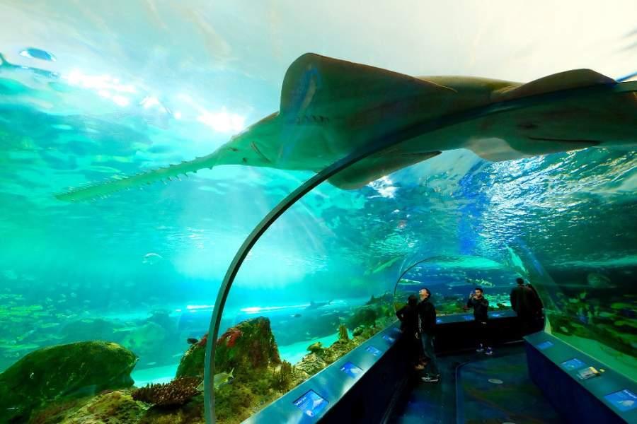 Túnel en el Acuario de Ripley en Toronto