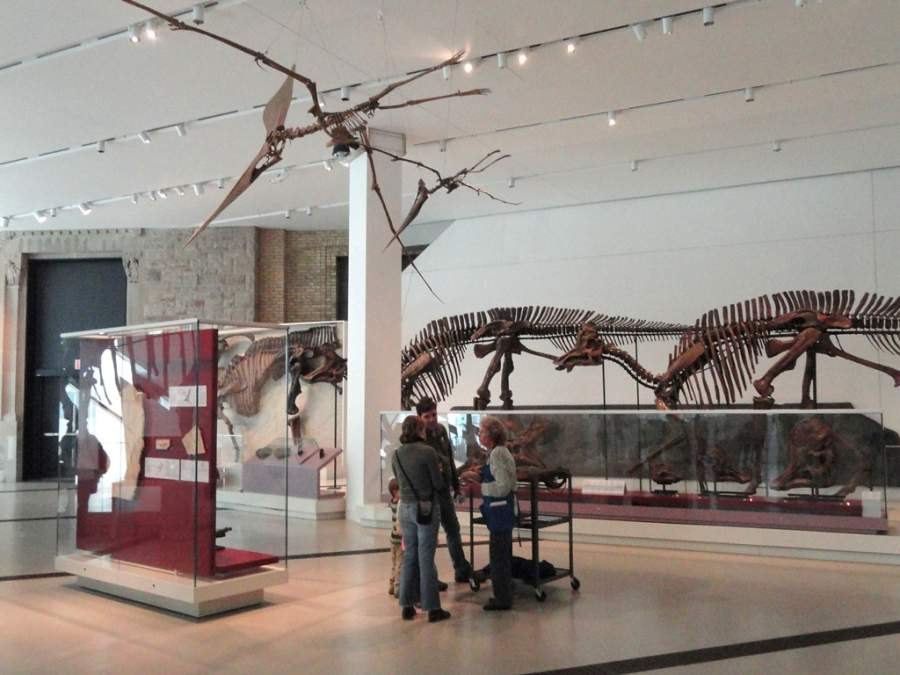 Exhibición de dinosaurios en el Museo Real de Ontario en Toronto