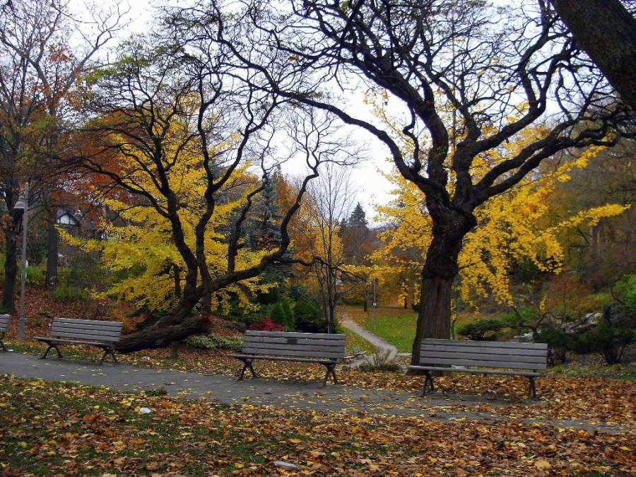 Vegetación en el Ivan Forrest Gardens en Toronto