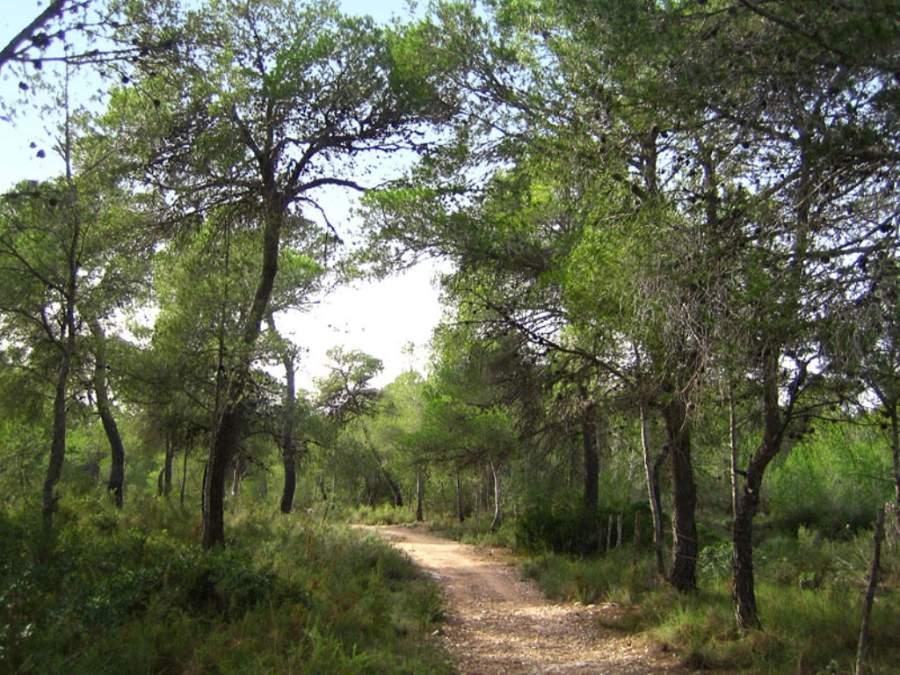 Disfruta del bosque de la Vallesa en Paterna