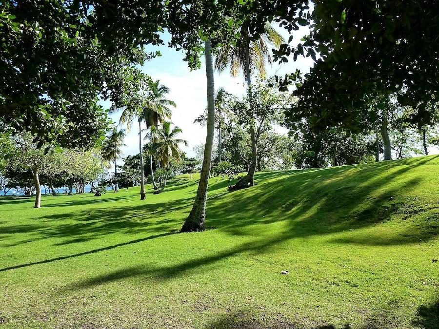 Vegetación tropical de Samaná