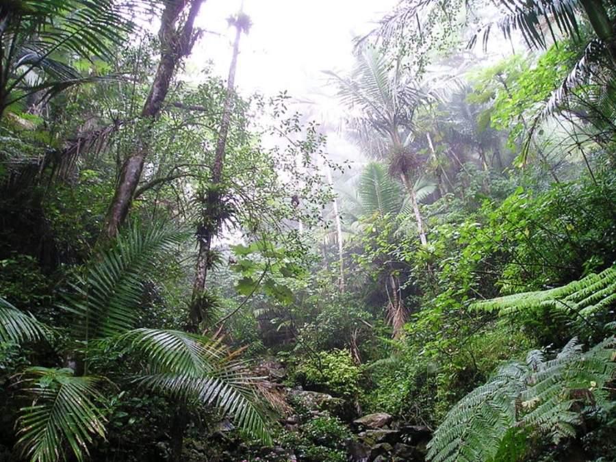 Flora del Bosque Nacional El Yunque