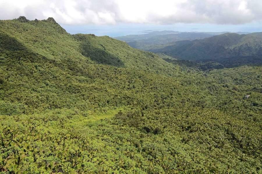 Panorámica del Bosque Nacional El Yunque