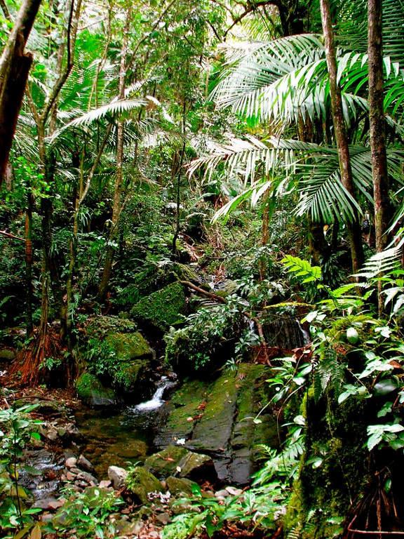 Biodiversidad de El Yunque