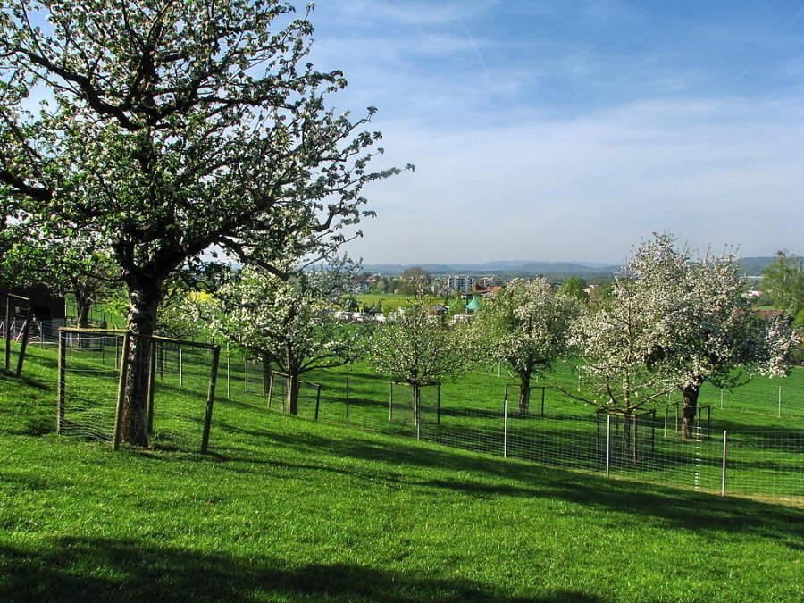 Áreas verdes en el poblado de Rümlang