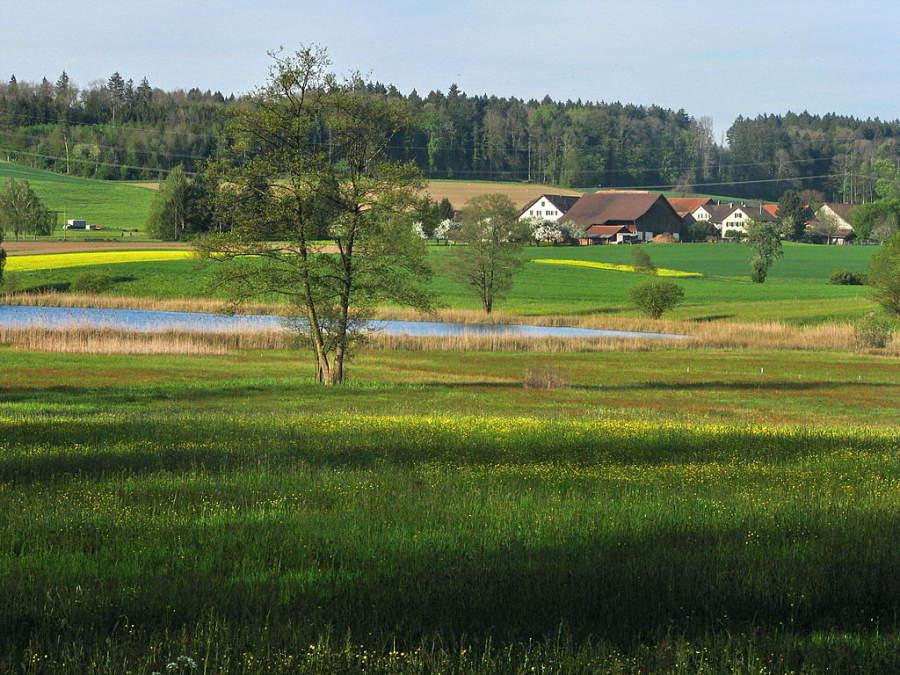 Paisaje típico de la zona de Regensdorf