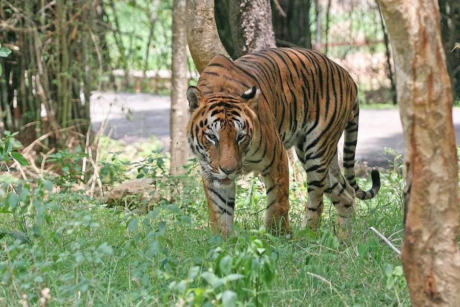 Observa los animales del Parque Nacional Bannerghatta