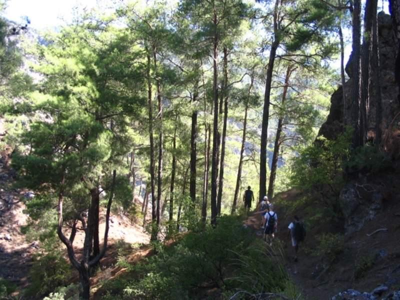 Zonas boscosas de Dalaman