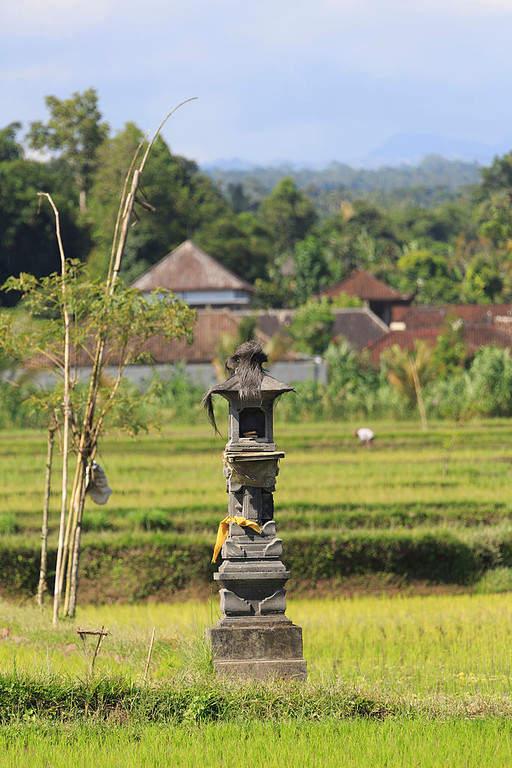 Campos de arroz en el distrito de Gianyar