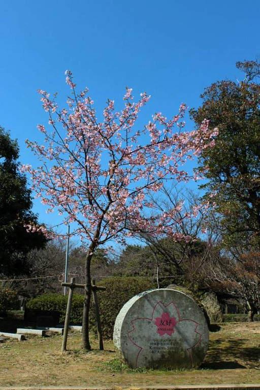 Cerezo con flores en el Parque Rojo en Komatsu