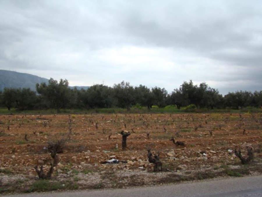 Paisaje de los terrenos de los Viñedos Markou en Paianía