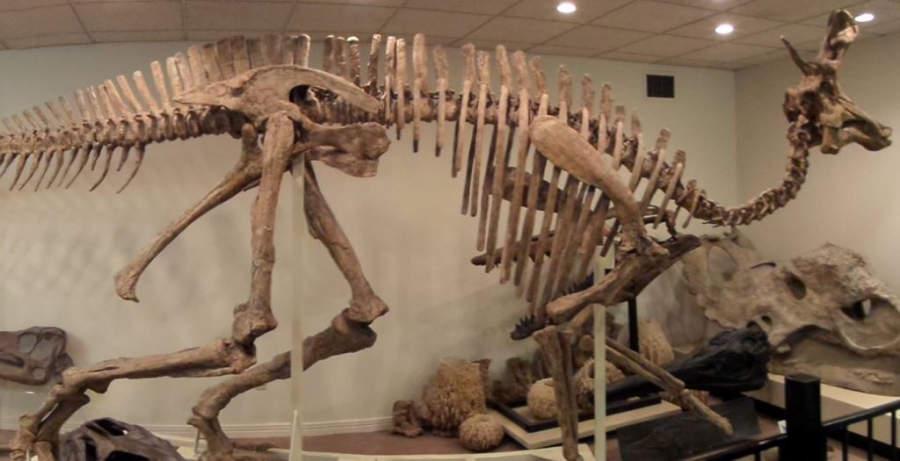 Dinosaurio del Museo Stones 'N Bones en Sarnia
