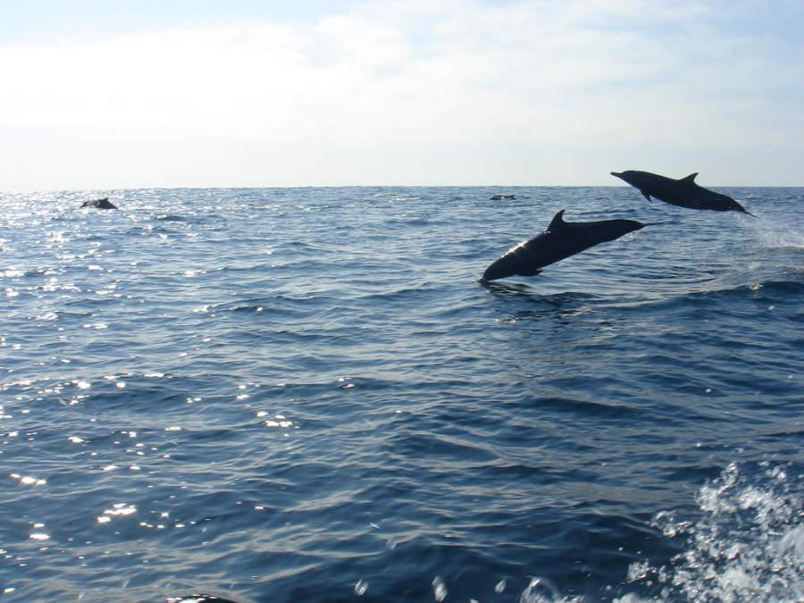 Delfines saludando en el mar de Santa María Huatulco