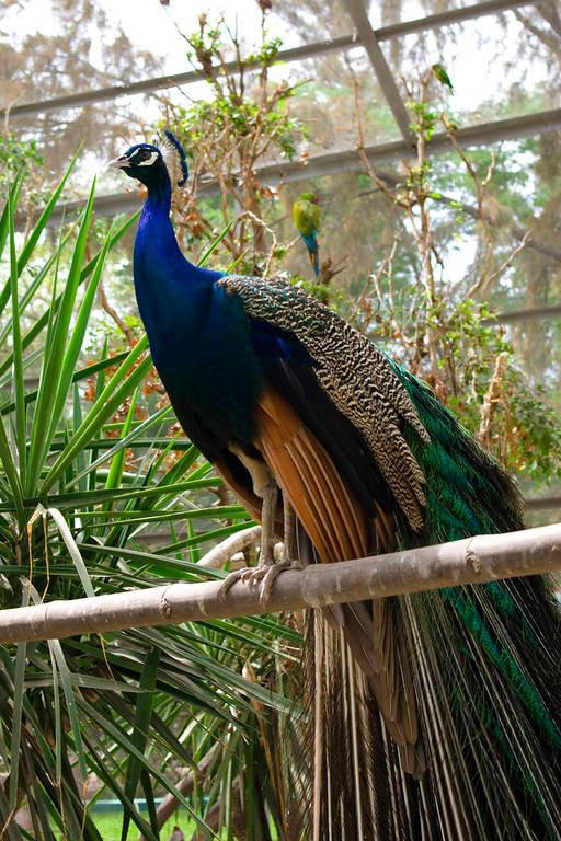El Acuario Mazatlán tiene un aviario