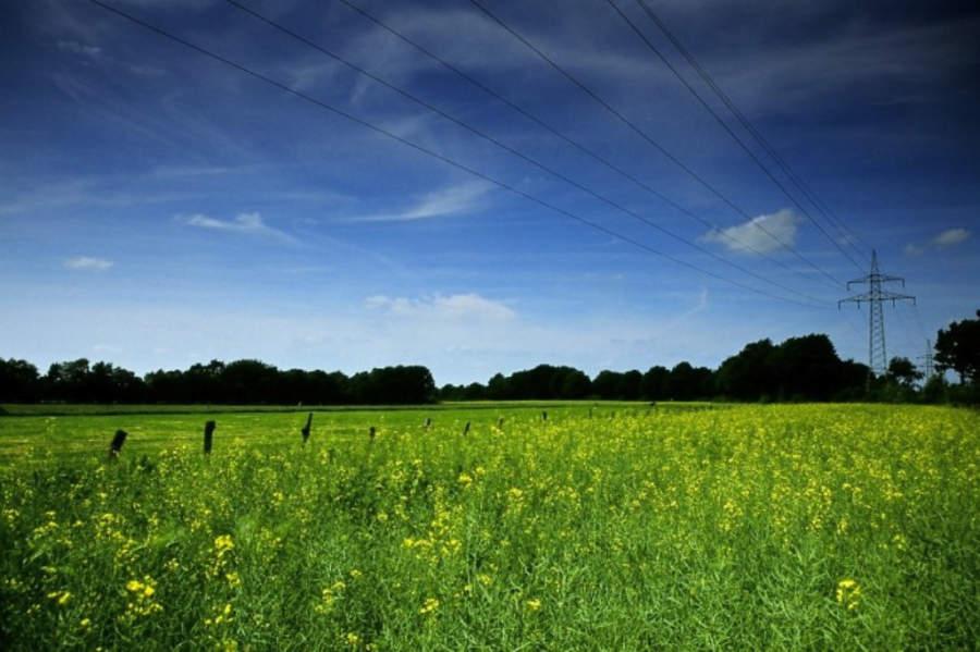 Rapeseed, un campo de agricultura en Schleswig-Holstein