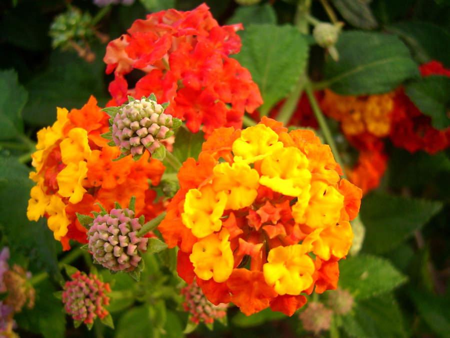 Colorido jardin en Trapani