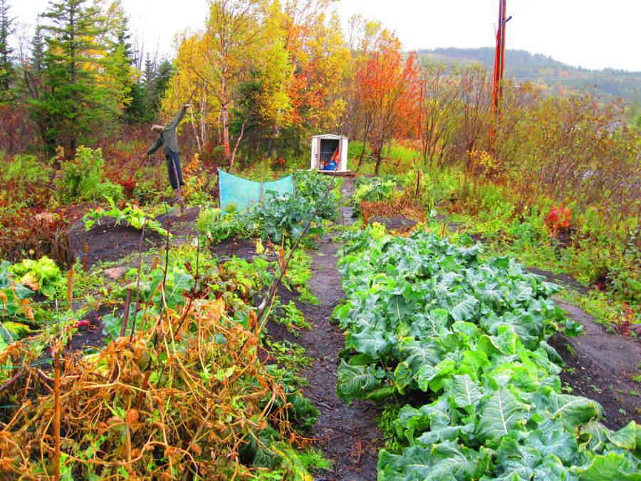 Jardín comunitario en Corner Brook