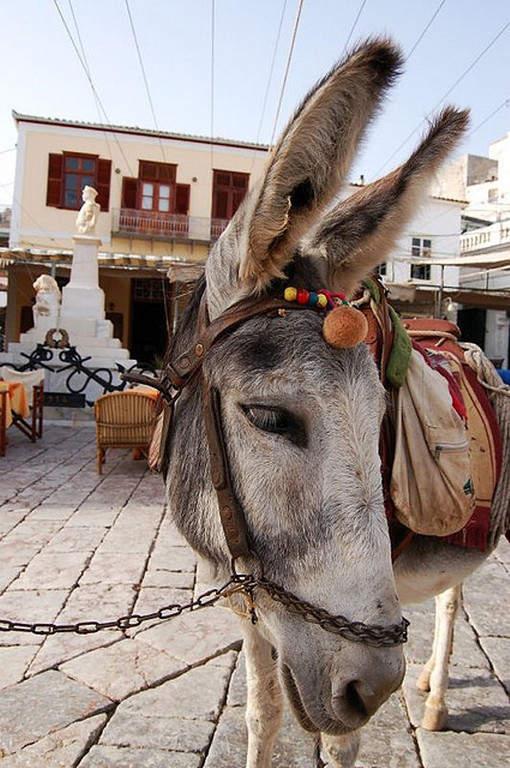Los burros son el principal medio de transporte en Hidra