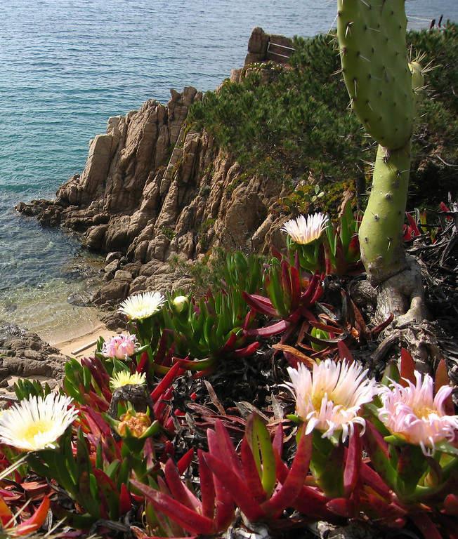 Flora de la región de Propriano