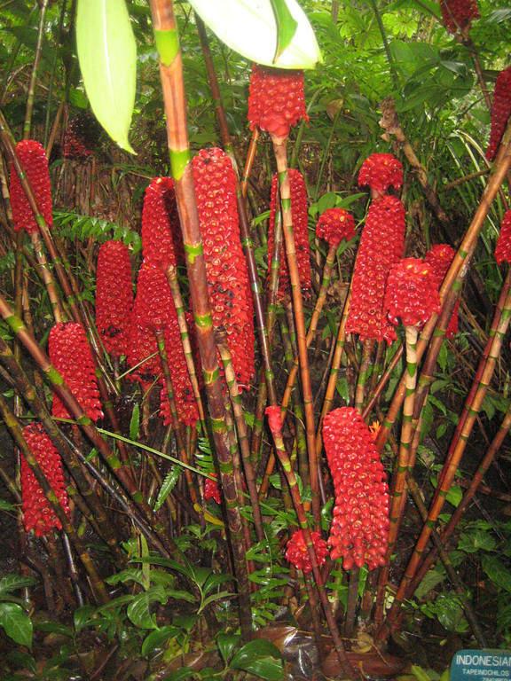Hawaii Tropical Botanical Garden, jardín botánico en Hilo