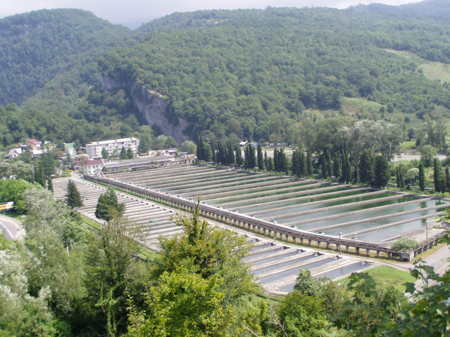Granja agrícola en Sochi