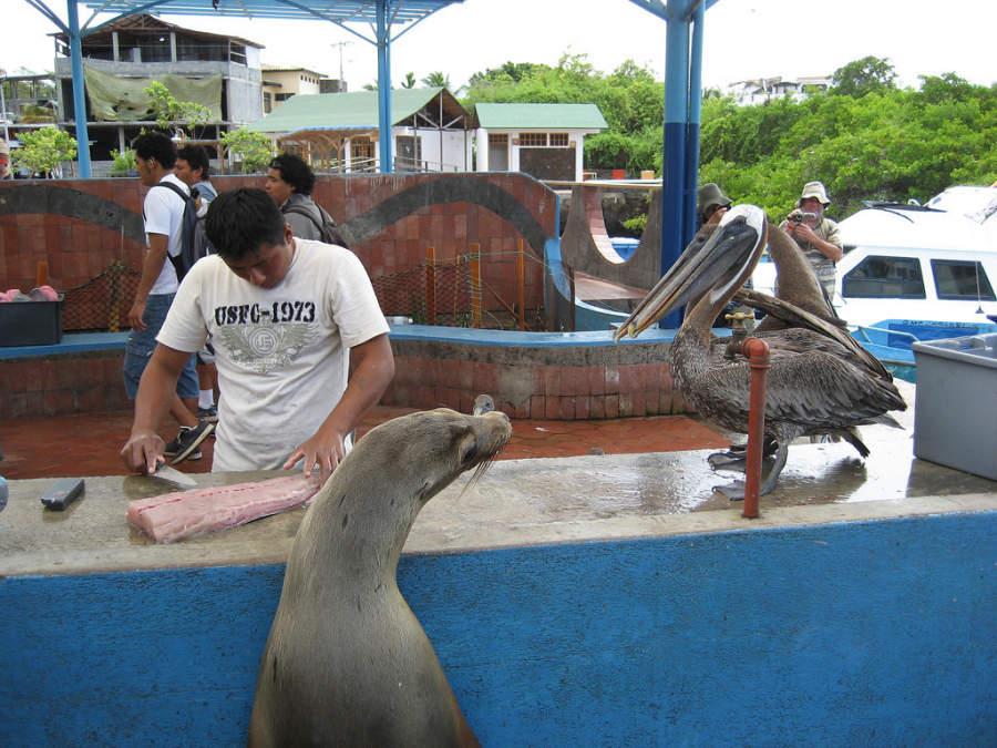 Pescadería local en Puerto Ayora