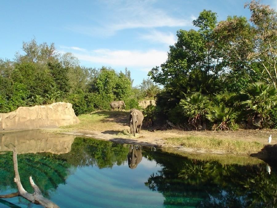 Kilimanjaro Safaris en el parque temático Animal Kingdom® en Orlando