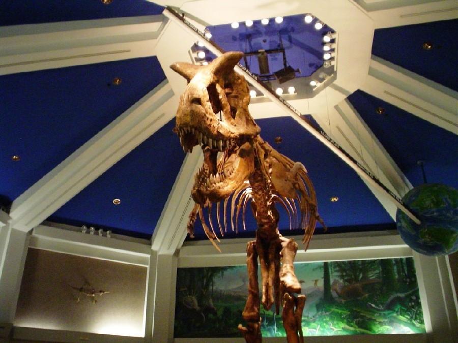 Dino-Sue en el parque temático Disney Animal Kingdom®
