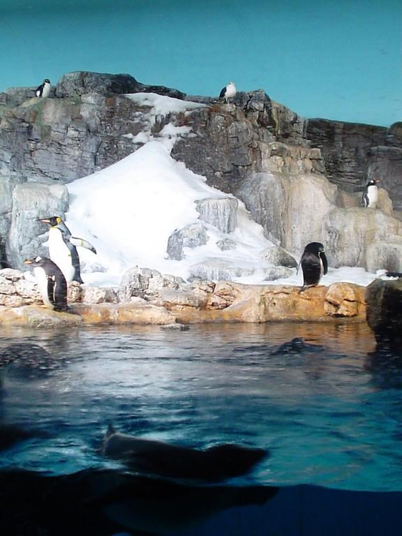 Encuentro con pingüinos en SeaWorld