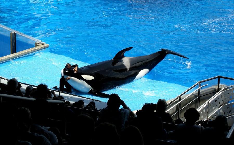 Espectáculo de Shamu en SeaWorld