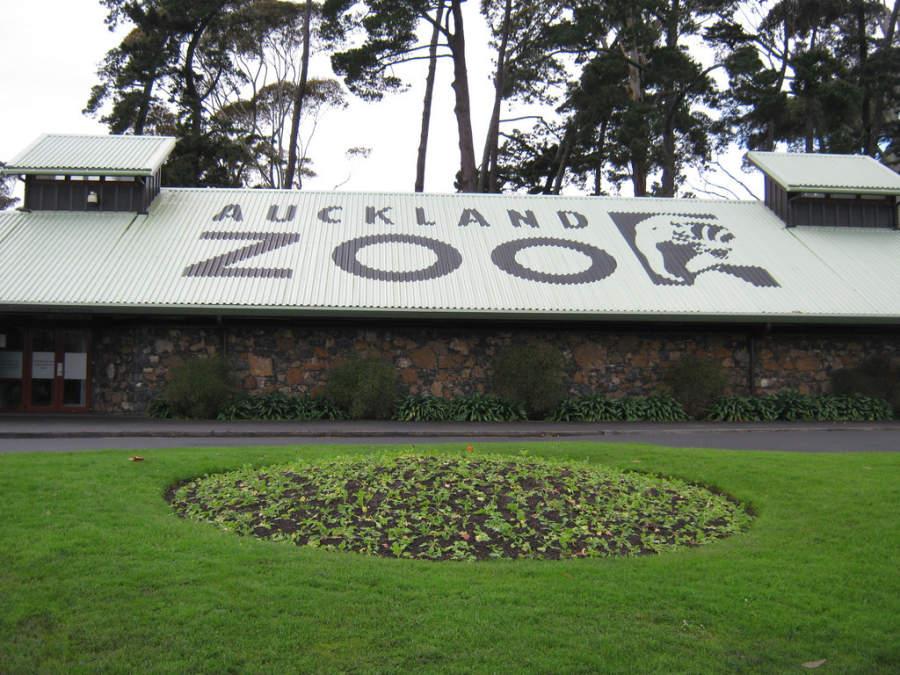 Auckland Zoo, el zoológico más grande de Nueva Zelanda