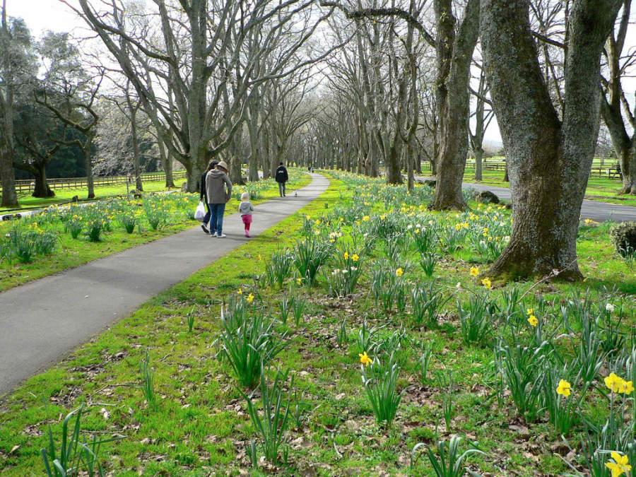 Cornwall Park, parque diseñado por el arquitecto paisajista Austin Strong