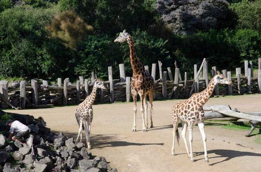 Auckland Zoo tiene animales nativos y exóticos