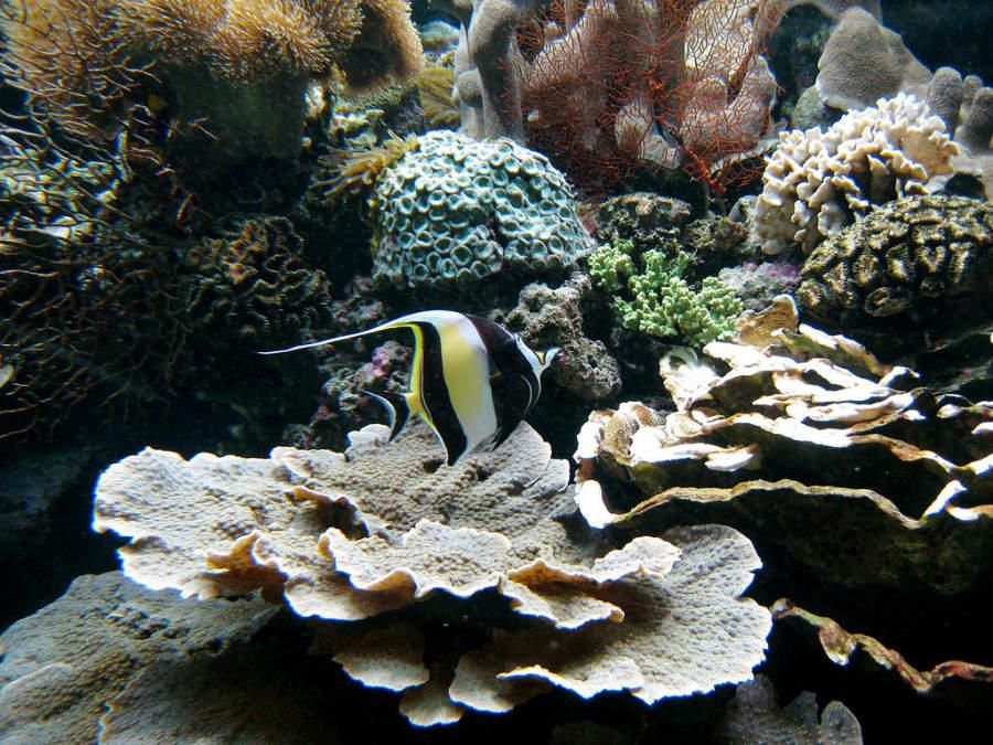 Interior de Aquarium des Lagons