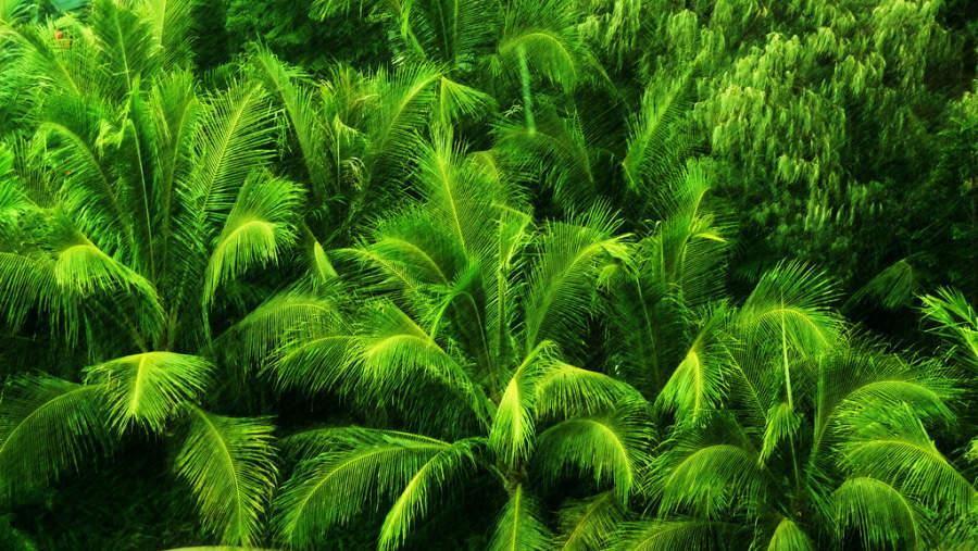 Numea tiene abundante vegetación