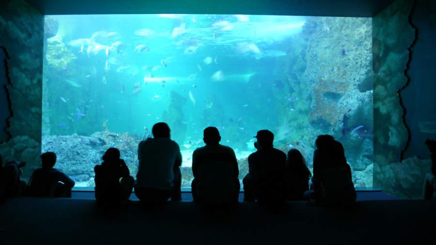 Sydney Aquarium, acuario con más de 650 especies