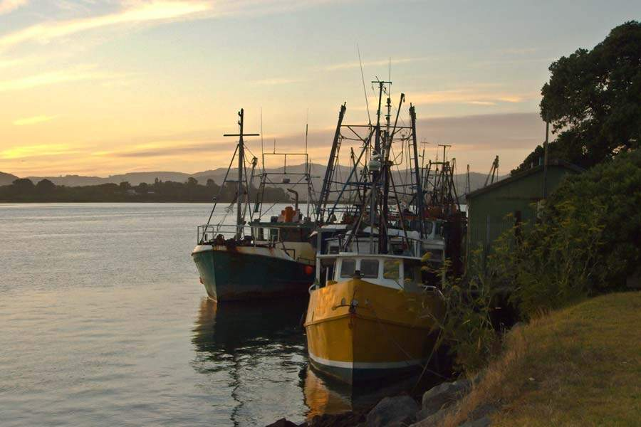 Barcos en Tauranga, región de Bay of Plenty