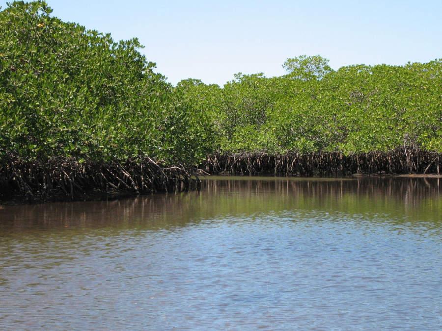 El Mogote, un área de manglar en La Paz