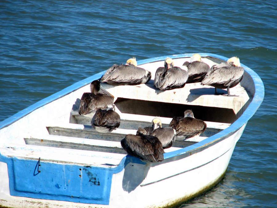 La Paz se distingue por ser el hábitat de diversas especies de aves