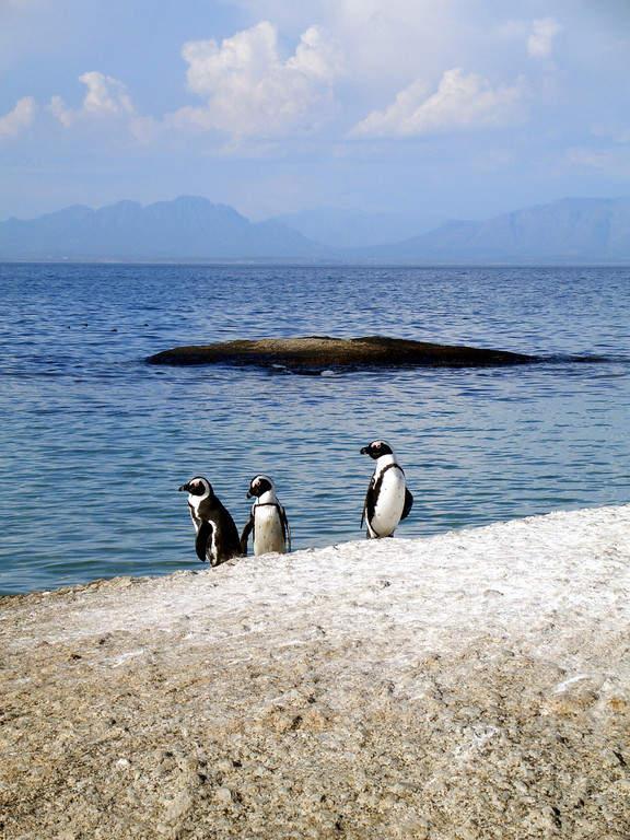 Pingüinos en Lüderitz