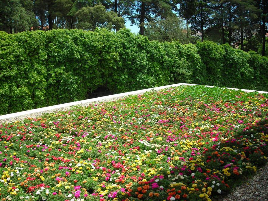 Hermoso jardín en la ciudad de Fátima