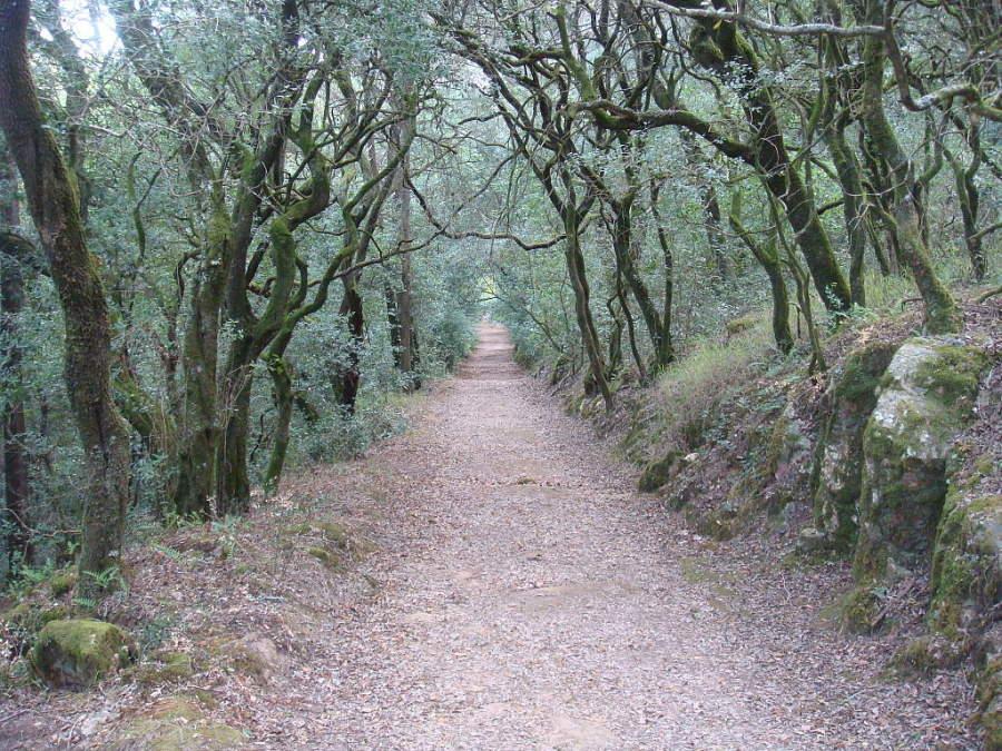 Bosque de Buçaco en el perímetro de Coímbra