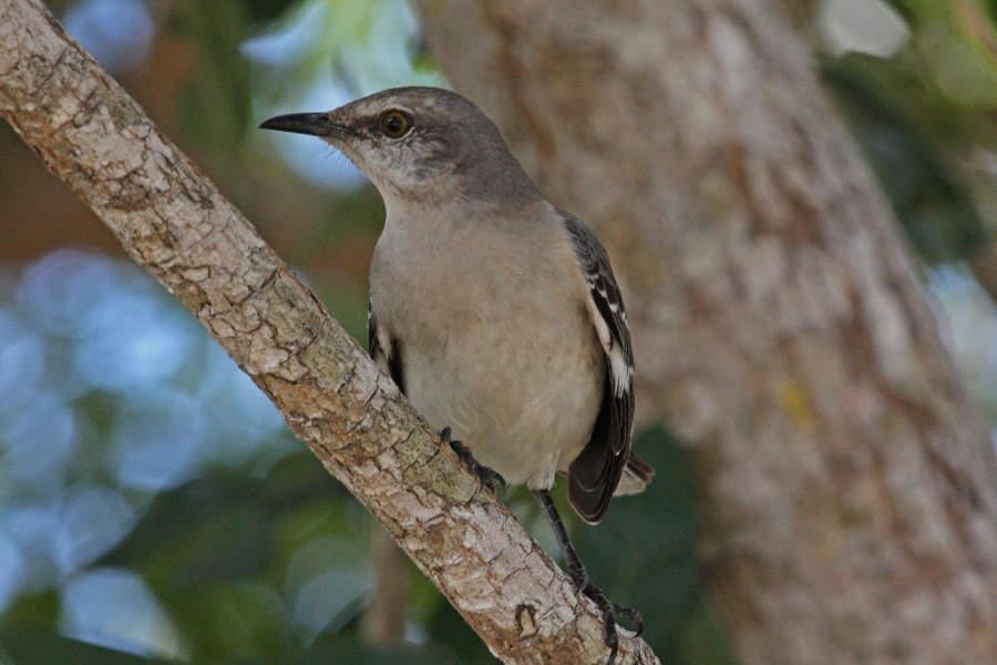 Playa Larga es ideal para observar aves