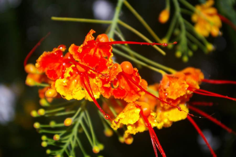 Colorida flor en Cabarate
