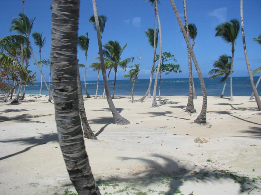 Palmas de coco en Las Terrenas