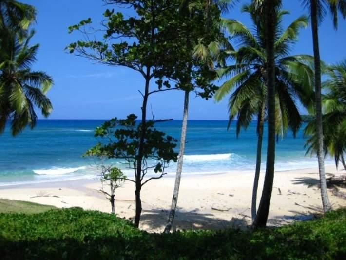 Palmas de coco en Río San Juan