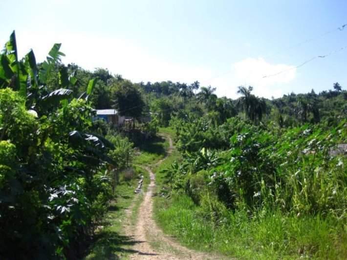 Río San Juan cuenta con abundante vegetación