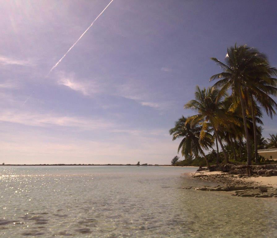 Palmeras cocoteras en Cayo Coco