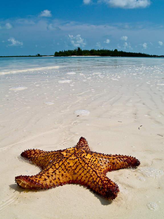 Estrella de mar a la orilla de la playa en Cayo Largo